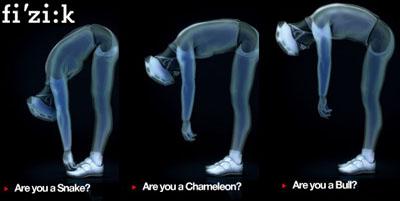 Fizik spine concept