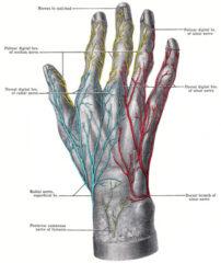 Ulnar nerve